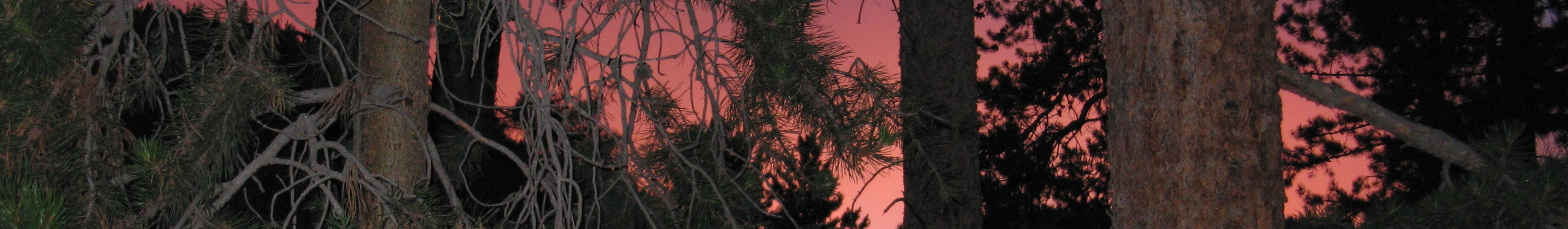 Sunset and pines in our camping spot :: Tennison Canyon, Colorado